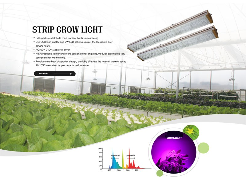 Warmly celebrate the establishment of the LED grow light department